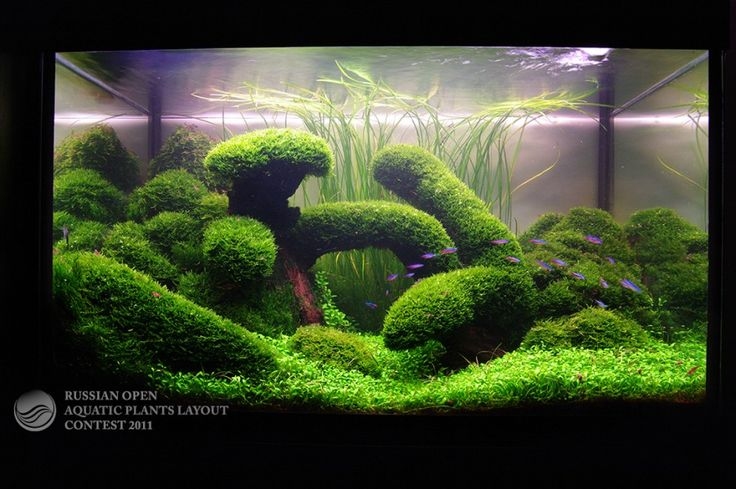 ... aquascapes aquariums aquascaping google alluring aquariums aquarium
