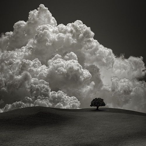lone tree & big clouds - black and white landscape photography pinned with Bazaart