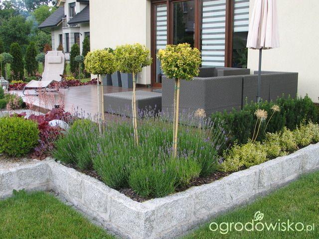 Ogród Tosi - strona 242 - Forum ogrodnicze - Ogrodowisko