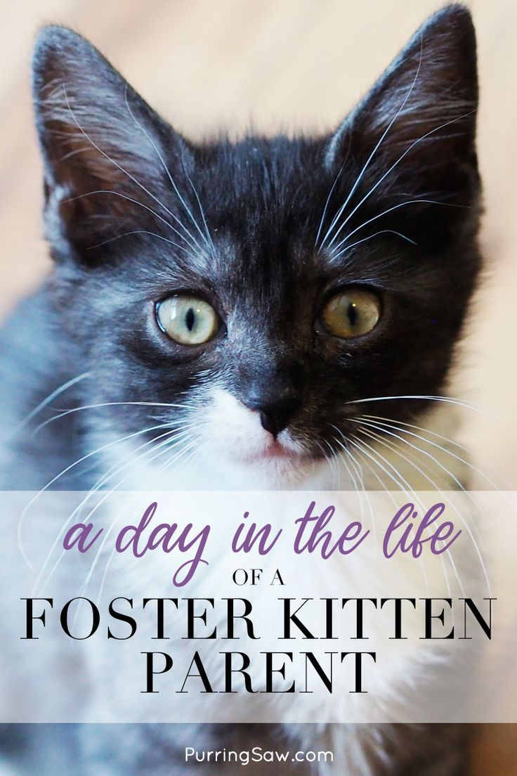 Pin This And Click Through To Read What Exactly Does A Kitten Foster Parent Do From Feeding To Cleaning To S Foster Kittens Foster Animals Kitten Adoption