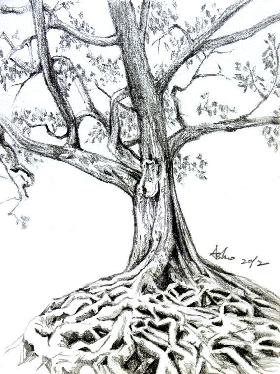 17 best images about drawing on pinterest trees for Best tree drawing