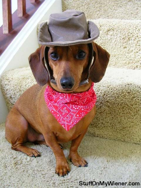 lolI M Ready, Lil Doggie, Howdy Pardner, Cowboy Costumes, Sweets Baby, Dogs, Cowboy Puppies, Funny, Lily'S Hats Scarf