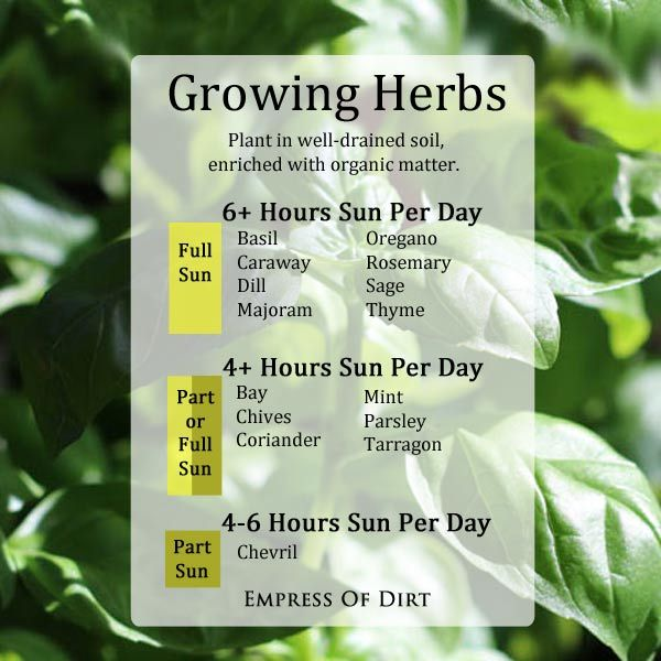 Growing Herbs - handy chart to know where to plant them according to how much sun they need