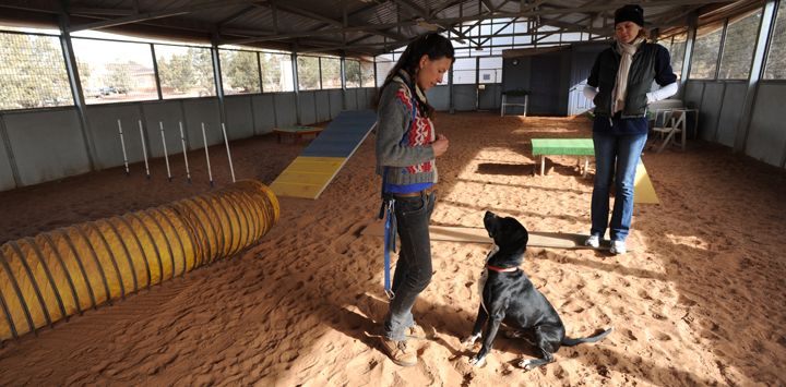windows not just openings and k9 grass not sand - Woman using relationship-based dog training with her dog through positive reinforcement in dog training class (workshop)