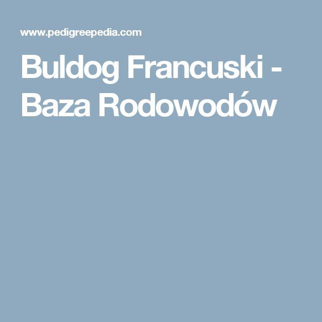 Buldog Francuski - Baza Rodowodów