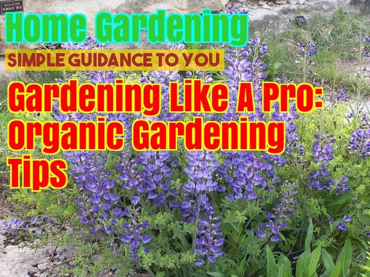 How To Start Your Own Organic Garden – Gardening For Beginners
