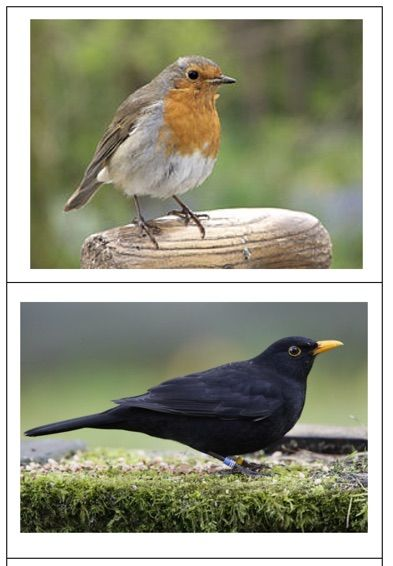 Legwerkje vogels - MontessoriNet