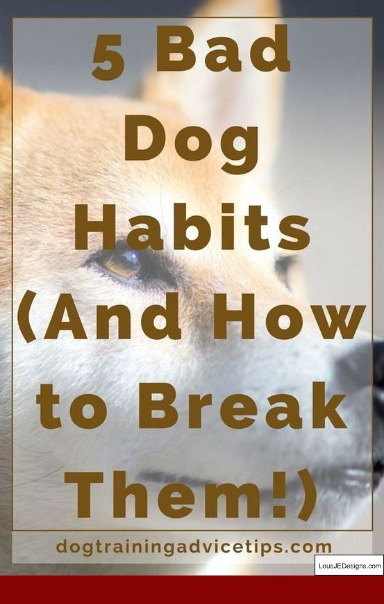 How To Train Your Dog To Come And Stay And Pics Of Tips For