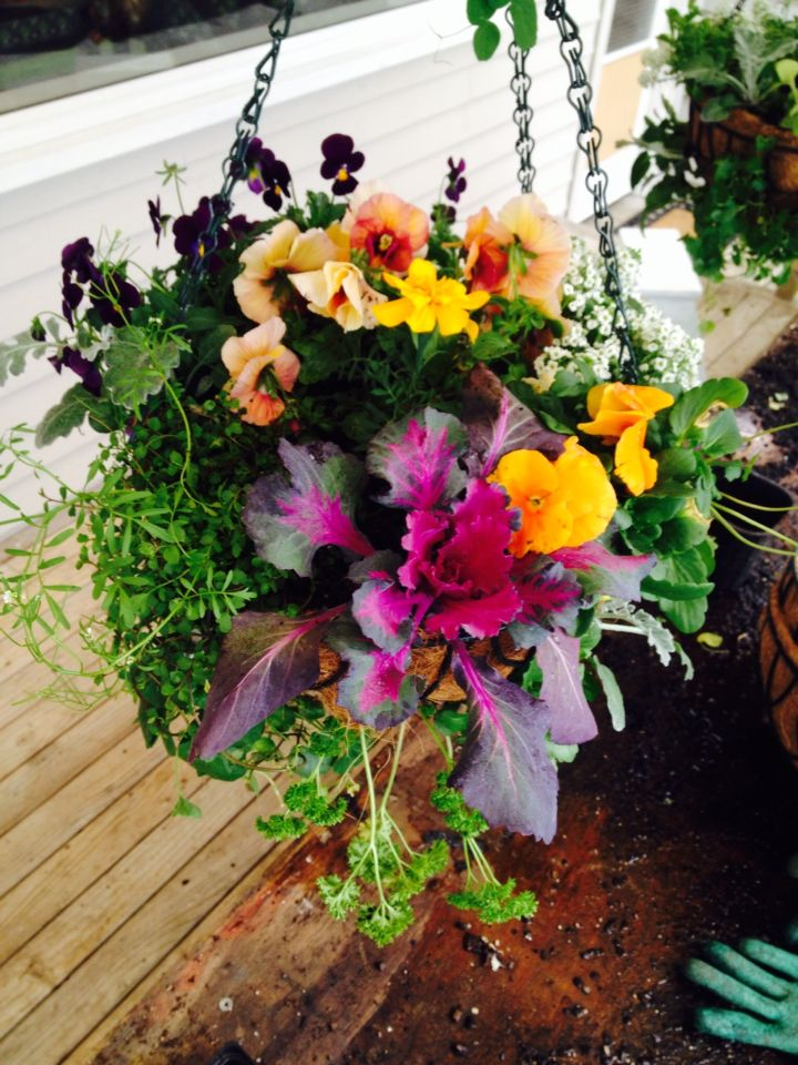 Floral hanging basket of colour and trailing greenery