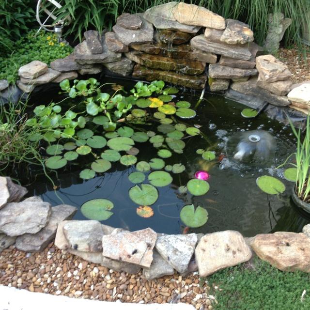 Peaceful fish pond.
