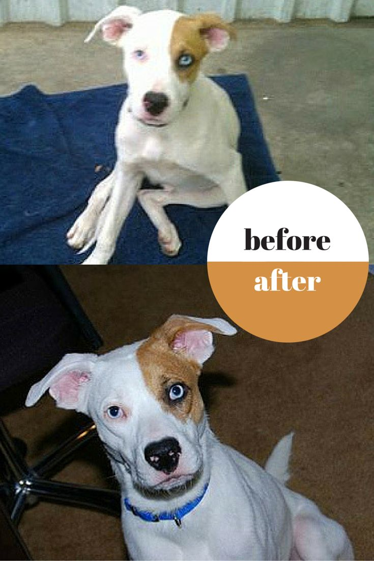 Best Rescues Before After Images On Pinterest Car Animal - 27 amazing transformations of dogs and cats before after adoption