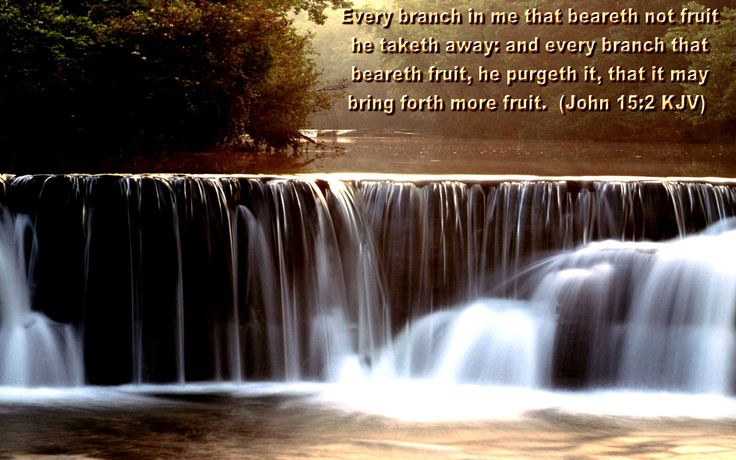 Bible Scripture John 15:2 Quote about God's Gift in Life: Every branch in me that beareth not fruit he taketh away, and every branch that beareth fruit, He purgeth it, that it may bring forth more fruit. John 15:2 ~ Bible