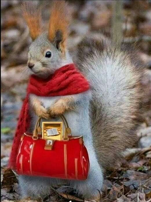 Bible questions answered, click pin to find out more. Lol so cute. Even the squirrels are preaching the good news ;)