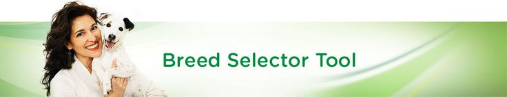 Iams Breed Selector Tool (Chinese Crested Powder Puff 74% 6/6/14)