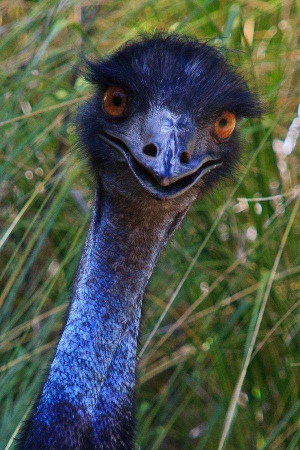 Ostrich, Mallorca, Spain Animals, Birds, the bees, Bird