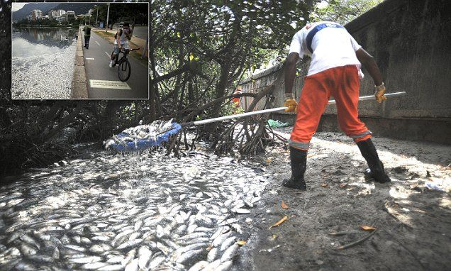 Lagoon filled with rotting fish set to host Olympic events in Brazil
