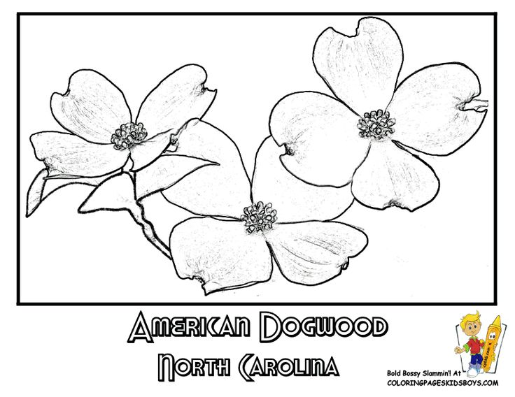 State Flower Printouts (With images) Oregon flower