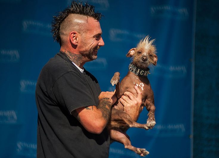 Icky | 16 Of The Cutest Dogs At The World's Ugliest Dog Contest