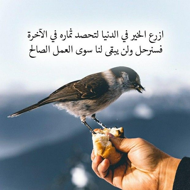 Pin By Fayssal Mahieddine On Files Arabic Quotes Quotes Mood