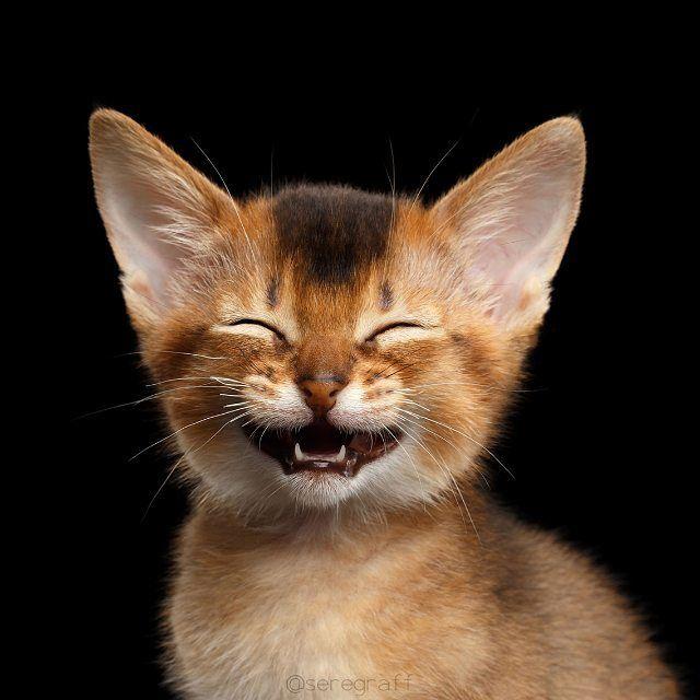 праву картинки улыбающиеся коты протяжении нескольких