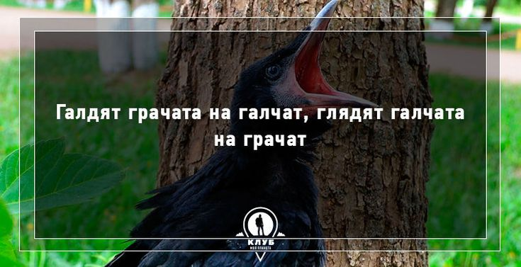 10 скороговорок про животных / Путешествия / Моя Планета