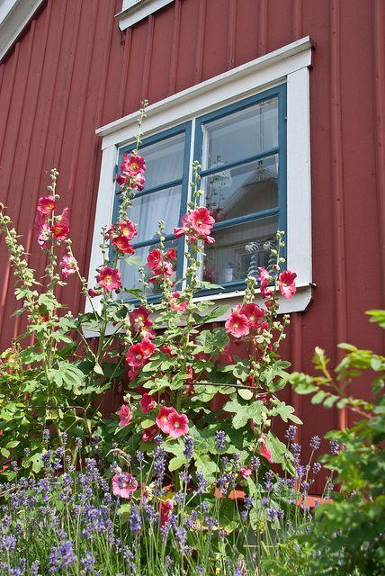 Mollösund, Orust, Sweden