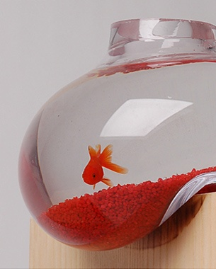 Bubble tank by psalt design random cuteness pinterest for Bubbles in fish bowl