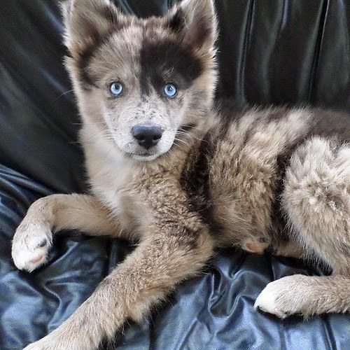 """Beautiful! From your friends at phoenix dog in home dog training""""k9katelynn"""" see more about Scottsdale dog training at k9katelynn.com! Pinterest with over 18,400 followers! Google plus with over 120,000 views! You tube with over 400 videos and 50,000 views!! Twitter 2200 followers! Now serving the valley for 11 plus years!"""