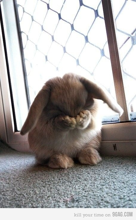 Hide and seek bunny!  casibee88