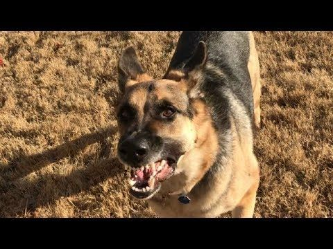Labrador Retriever Puppies Erie Pa Midnight The Stray Labrador