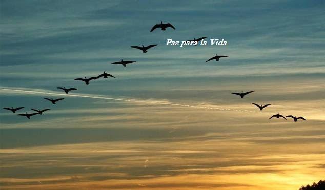 Paz para la Vida: El Vuelo de los pájaros