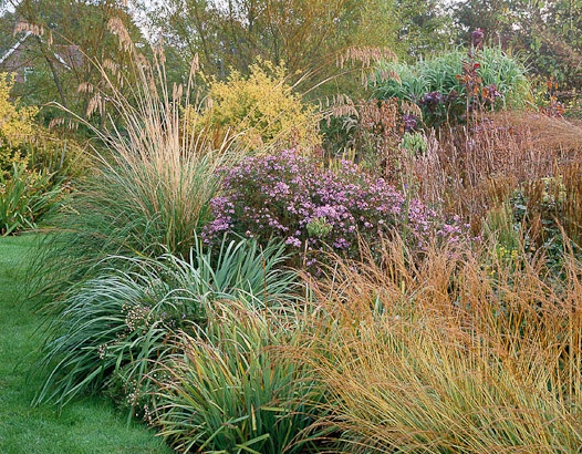 Marchants Hardy Plants The garden and nursery are packed with unusual perennials with the grasses at their peak in Autumn. Photographed by Clive Nichols.
