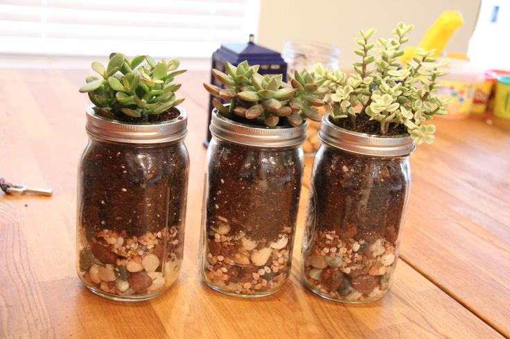 Cute way to display your indoor plants - succulents in mason jars. #DIY #homedecor #giftideas