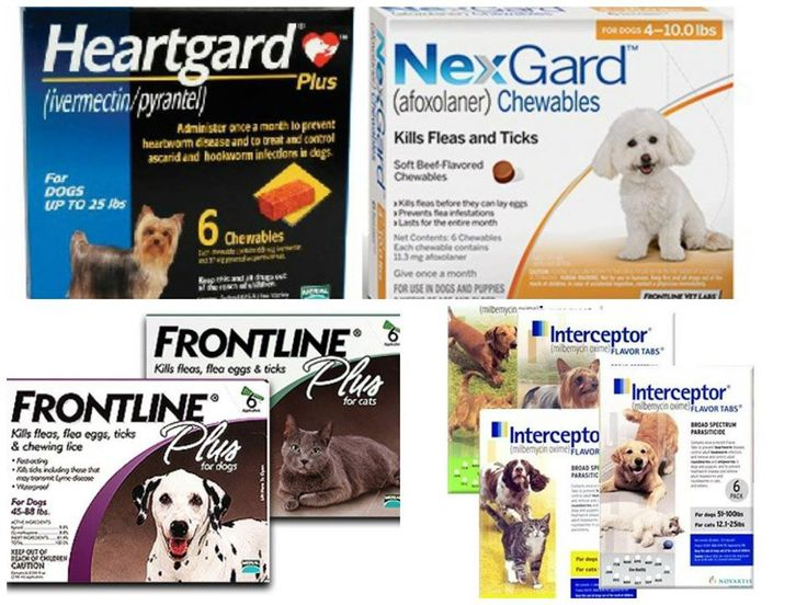It S The Season To Look Out For Fleas Ticks And Heartworms We Recommend Heartgard Frontline Nexgard And Interceptor For P With Images Preventive Care Fleas Heartworm