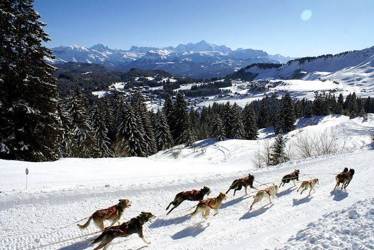 Annual dog sled race (La Grande Odyssée)  From Praz de Lys-Sommand to Les Gets to Morzine over mountain snow trails.