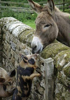 Friends, over the wall.