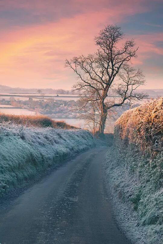 First light: Frosty Morning in Somerset, England. Photo by Sarah Brooks.