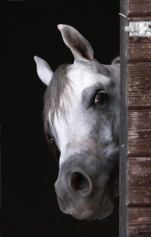 around the barn door