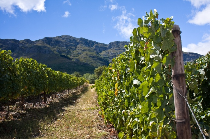 Explore the vinyards at your leisure.