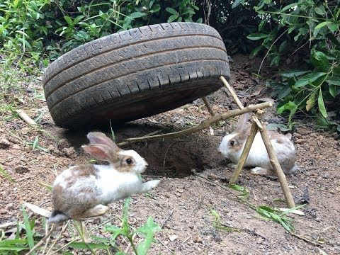 Amazing Quick Rabbit Trap Using  Car  Wheel  And  Deep Hole - How To Make Rabbit Trap  Car  Wheel - YouTube