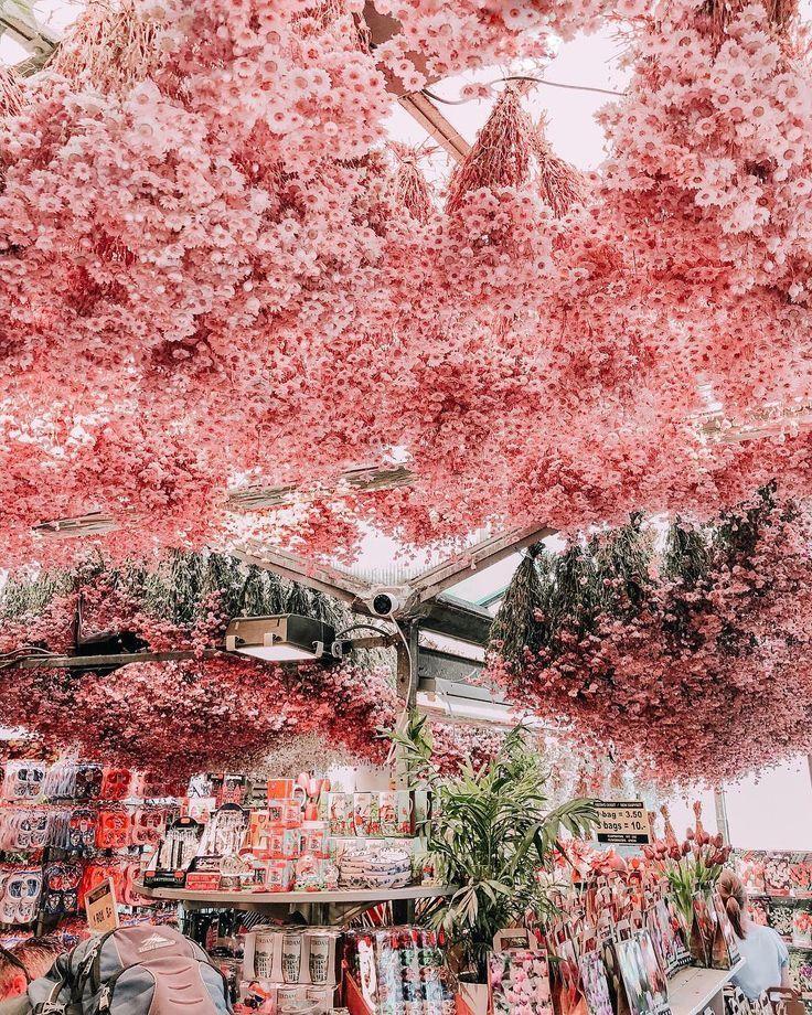 Wanderlust – Mercato dei fiori rosa da non perdere ad Amsterdam, Paesi Bassi.