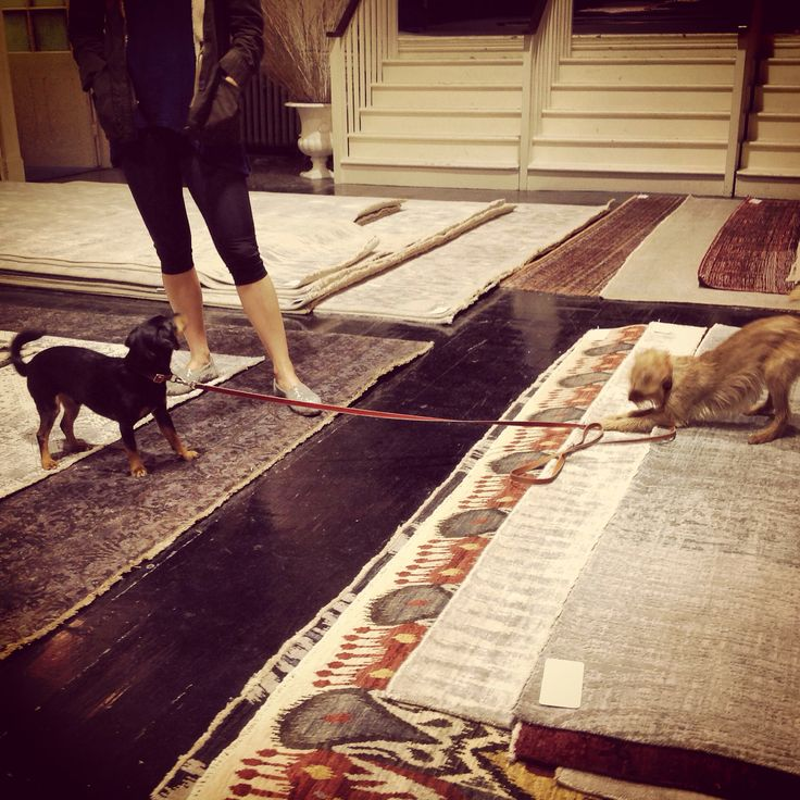 Two canines with a penchant for Luke Irwin rugs...