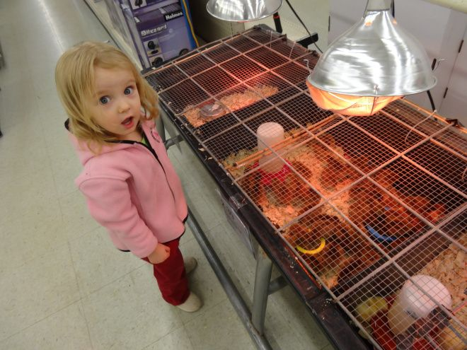 17 Images About Brooder Box Ideas On Pinterest Raising Chicken Coops And Duck Coop