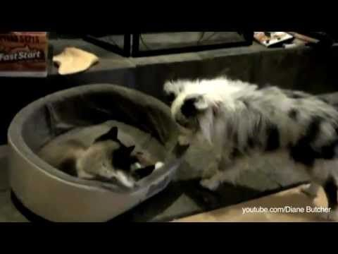 Cats Stealing Dog Beds The Supercut  Compilation
