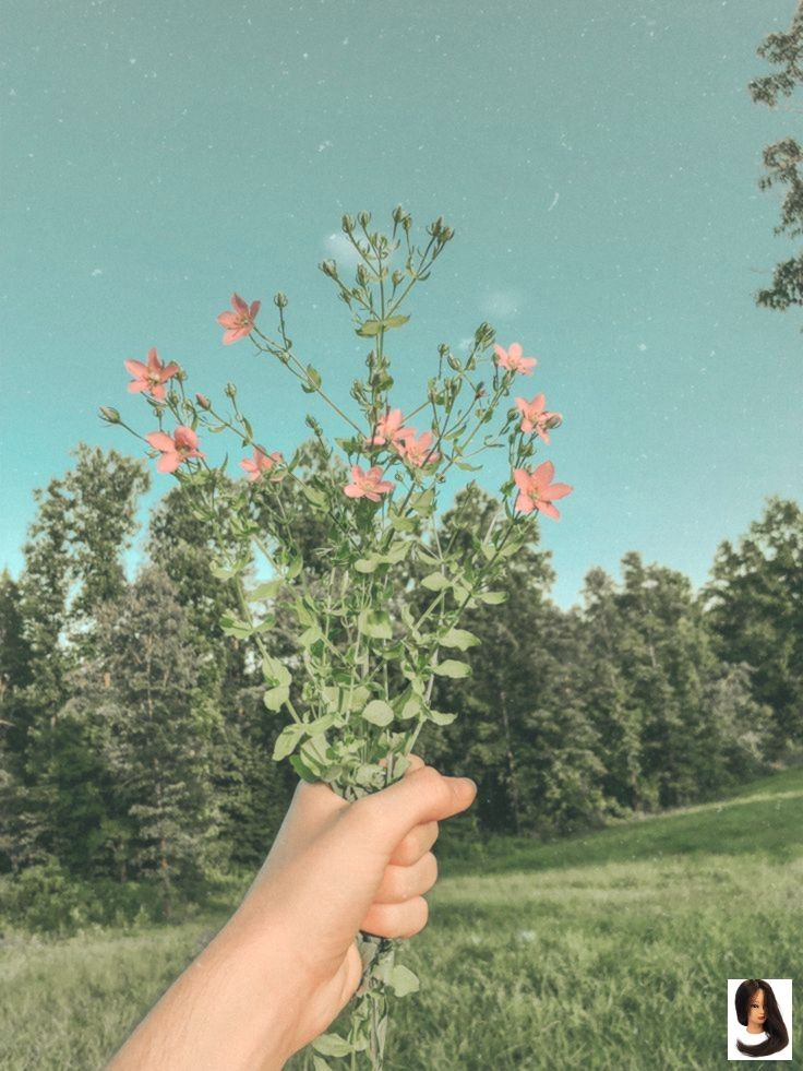 Green Aesthetic L O G A N Aesthetic Flower Green Tennessee Sky Nature Aesthetic Spring Aesthetic