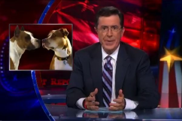 WATCH: Steven Colbert on Rep. Steve King's Dogfighting Defense: Animal Rescue, Steven Colbert, Fighting Laws, Animal Kingdom, Dog Fighting, Steve King S, Raising Animals, King S Dogfighting, Dogfighting Defense