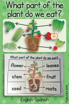 What part of the plant do we eat? fold & learn $ great science activity to teach with the book: Tops & Bottoms