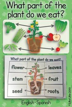 Las plantas en inglés