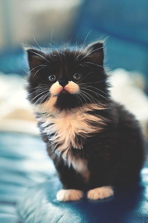 Gorgeous Little Montser.