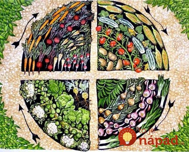 Je vedecky podložené, že striedanie plodín na tom istom mieste v záhrade v istom časovom odstupe, má veľmi priaznivý vplyv nielen na kvalitu pôdy, ale aj na množstvo úrody. Nie je však jedno kam, ktoré plodiny vysádzate ani to, ako často plodiny na tom istom mieste meníte.